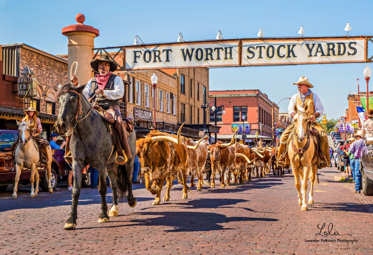 Mr stockyards vip tour fort worth tx 76164 - American gardens west 7th fort worth ...