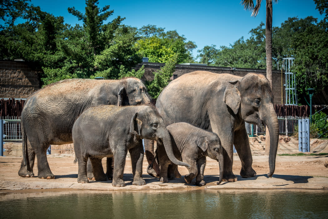 Houston Zoo | Things To Do in Houston, TX 77030