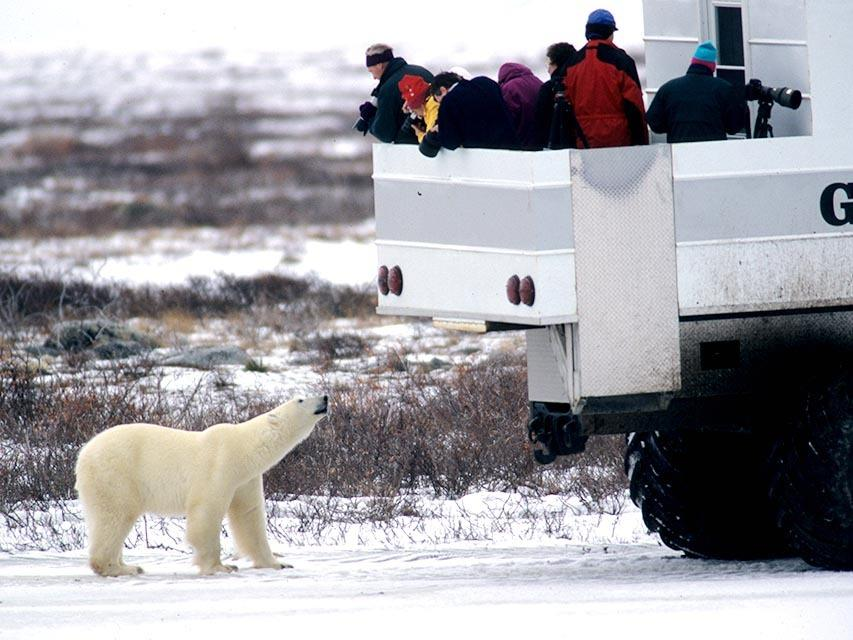 Great White Bear Tours Inc