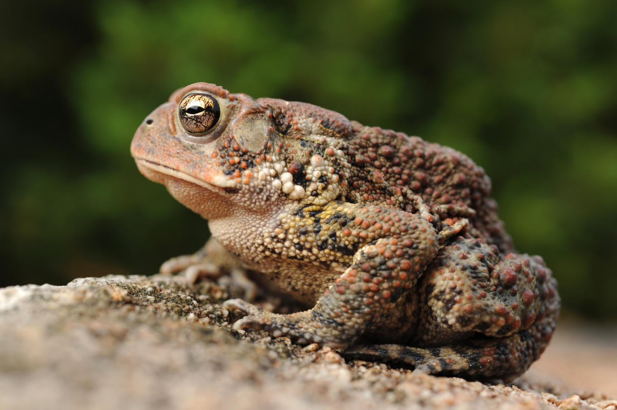 Become a FrogWatcher! Training