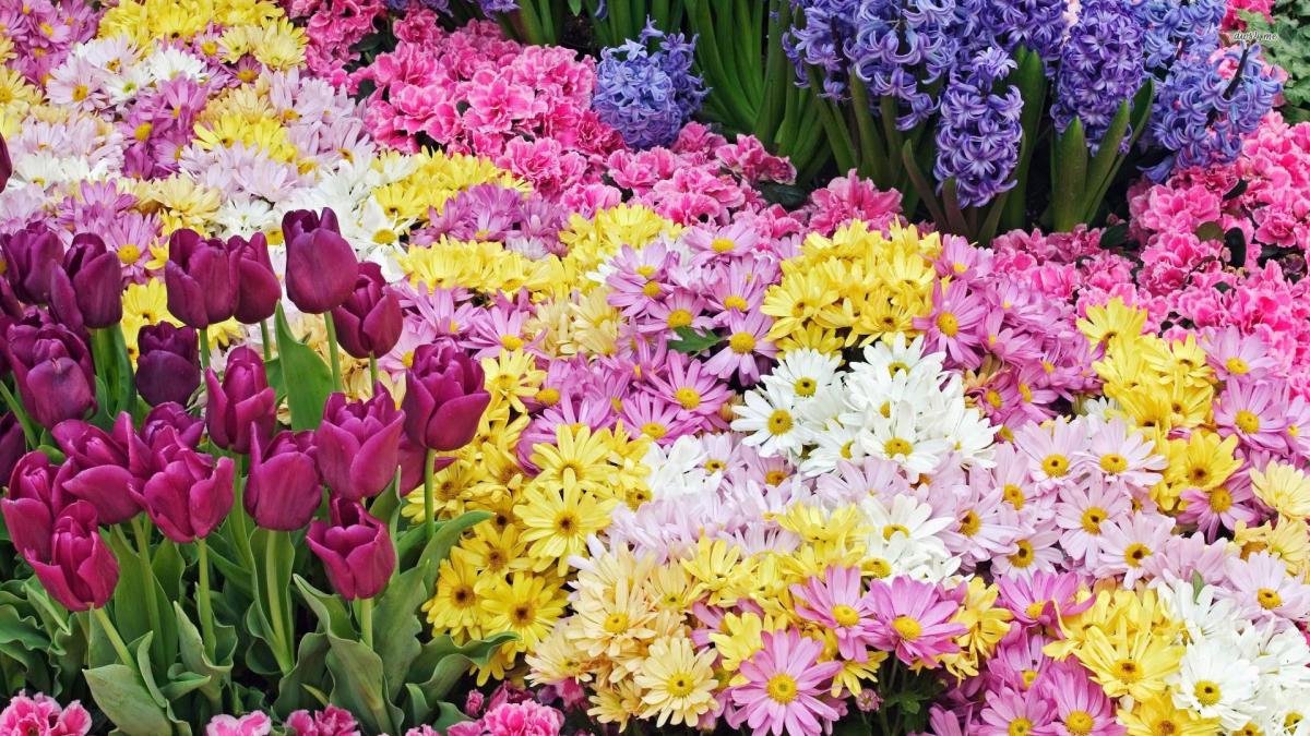 Rhode Island Spring Festival