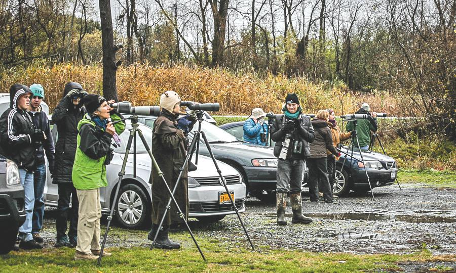 INSIDE THE FLX: Finger Lakes Birding Festival comes to Cayuga County (podcast)