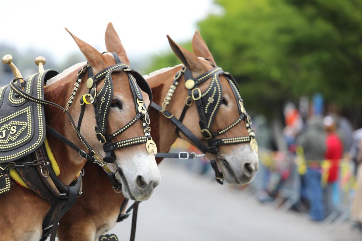 cfad28d4146 Mule Day