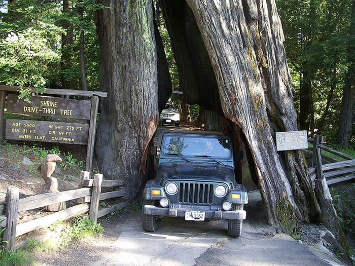Tour the Avenue of the Giants Avenue Of The Giants Map on