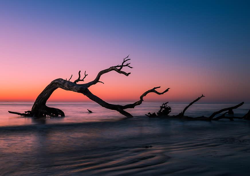 Driftwood Beach Jekyll Island Ga 31527