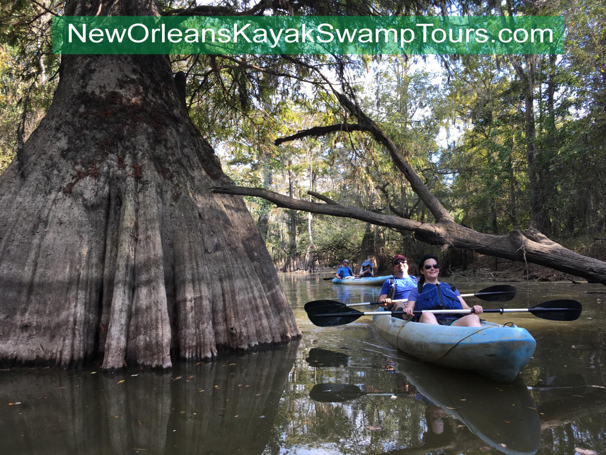 Swamp Tour New Orleans >> New Orleans Kayak Swamp Tours