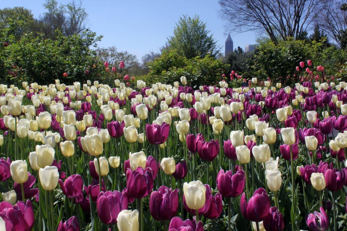 Atlanta Botanical Garden Atlanta Ga 30309