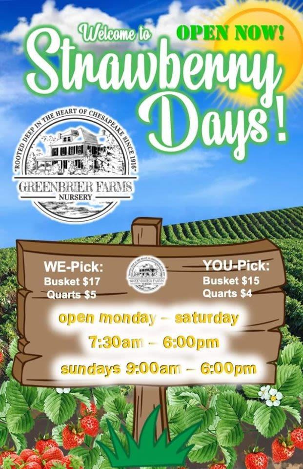 Greenbrier Farms U Pick Strawberry Fields