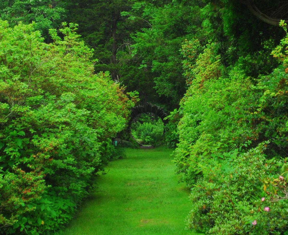 Kinney Azalea Gardens on