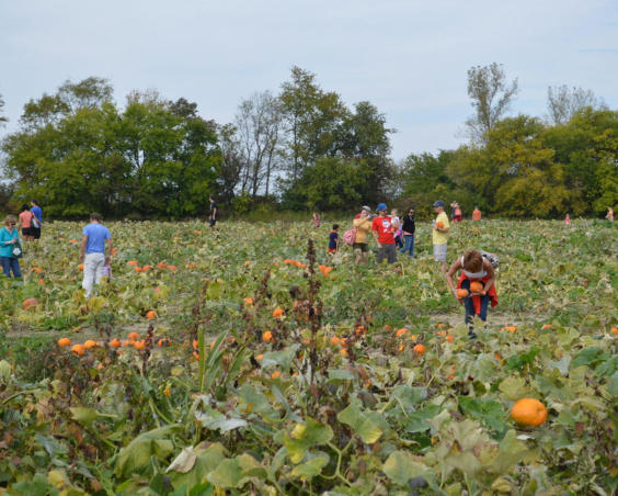 Beasley's Orchard - Pumpkin Patch