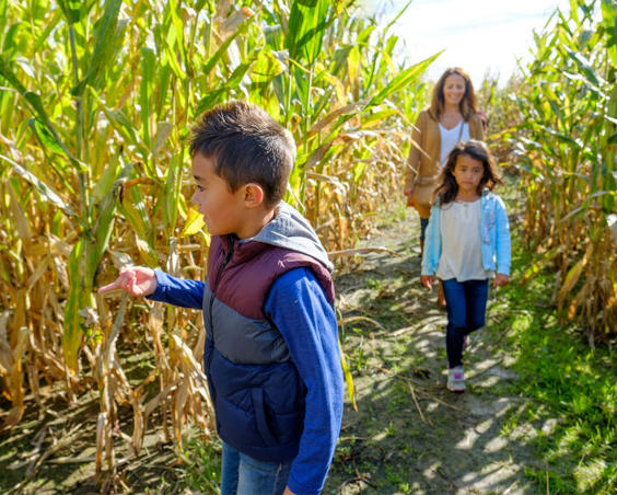 Beasley's Orchard | Corn Maze