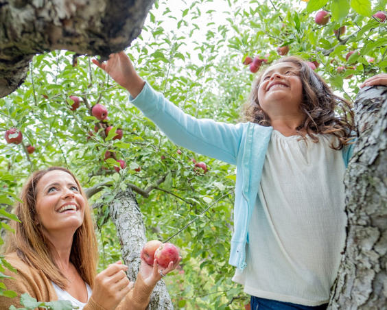Beasley's Orchard |  U-Pick Apples