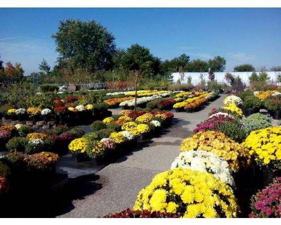 Cox' Plant Farm