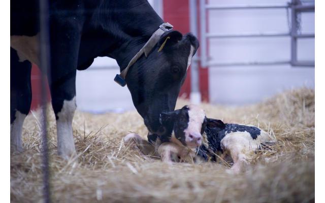 Fair Oaks Dairy Adventure