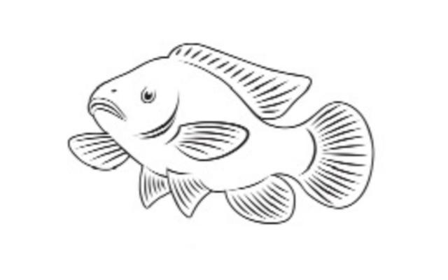 tippco fish