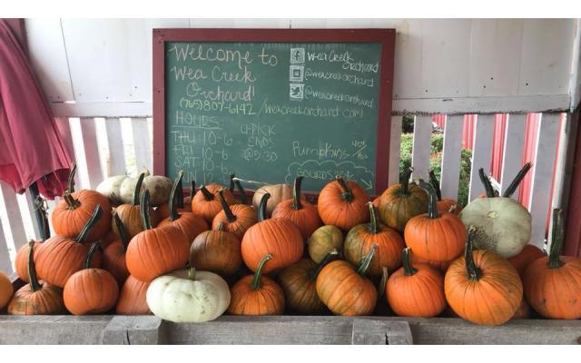 Wea Creek Pumpkins