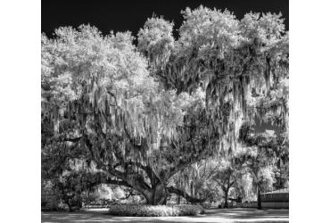 Wasatch Camera Club Photography Exhibit: Lovely As A Tree