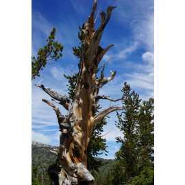 Great Basin National Park_0