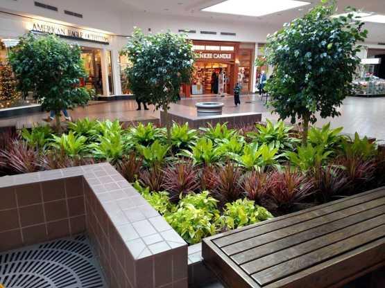 Capital InteriorScapes mall planting