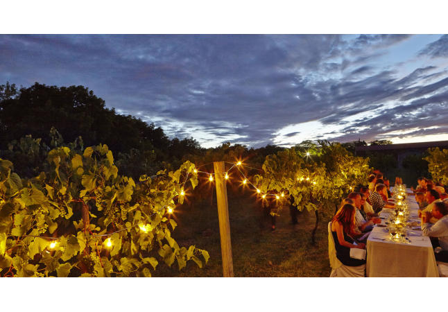 Lights and Vines