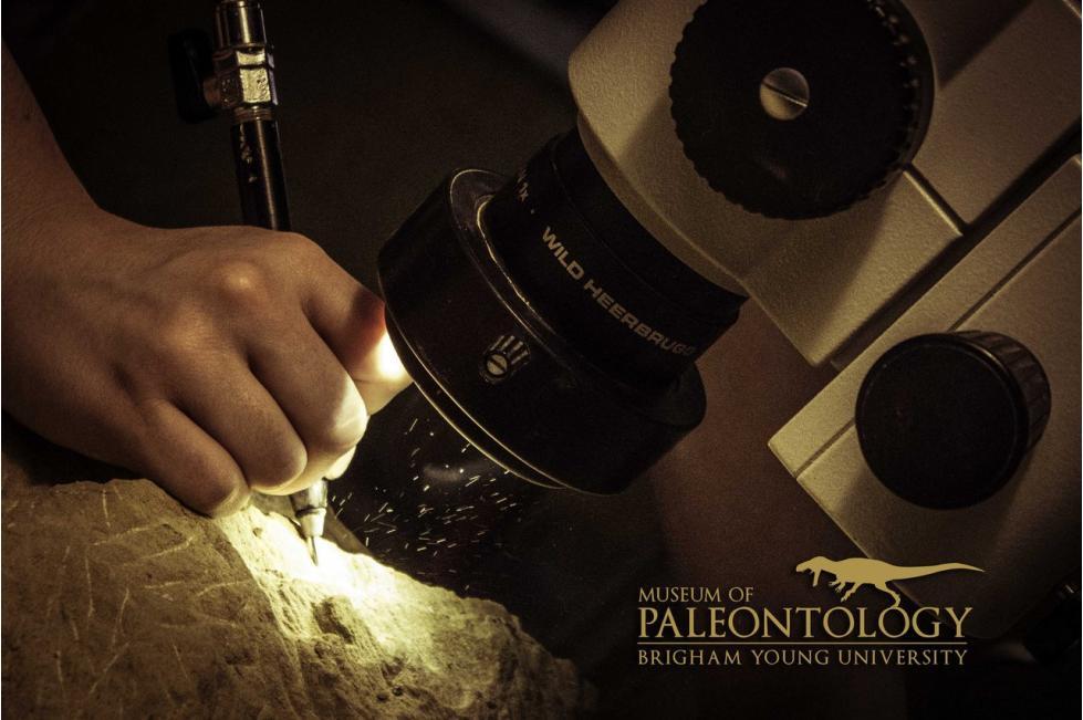 Paleontologist at Work 2