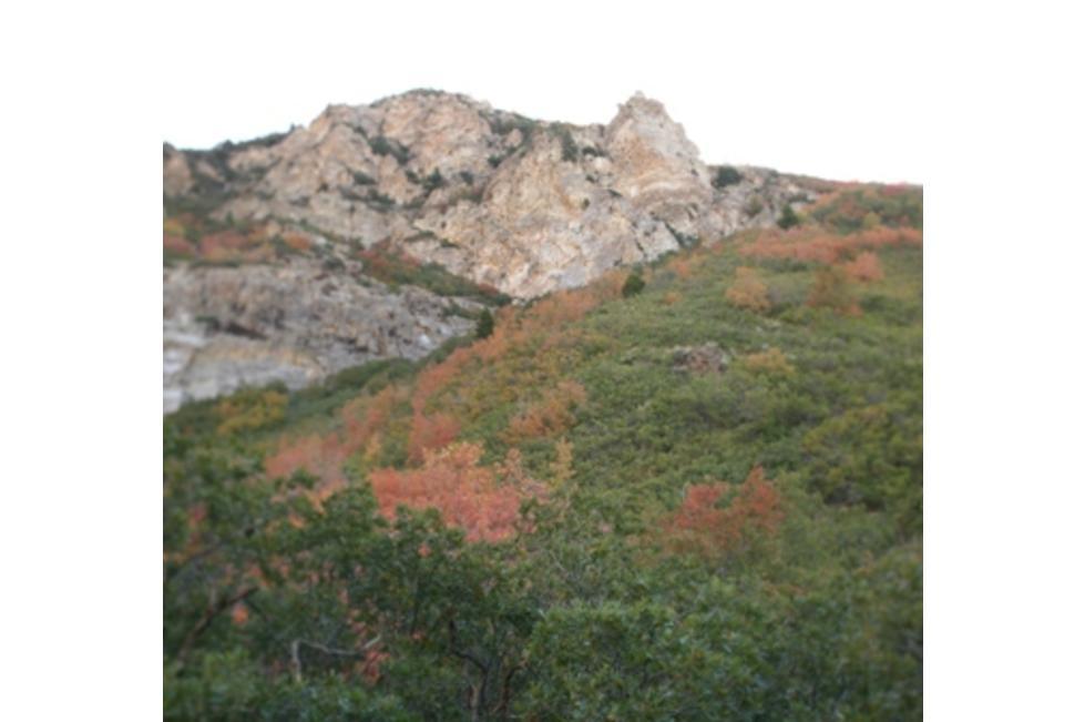 Rock Canyon1