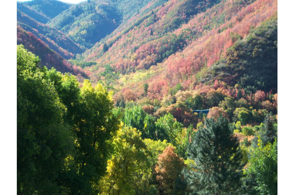 Springville Canyons