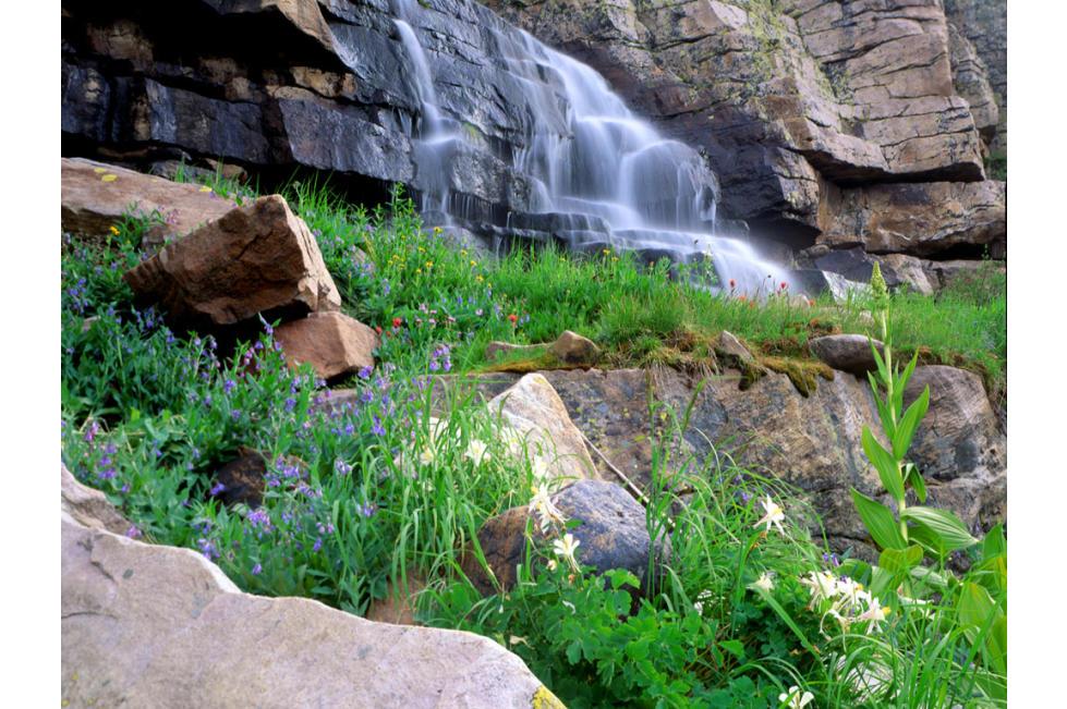 Cascading Falls & Flowers