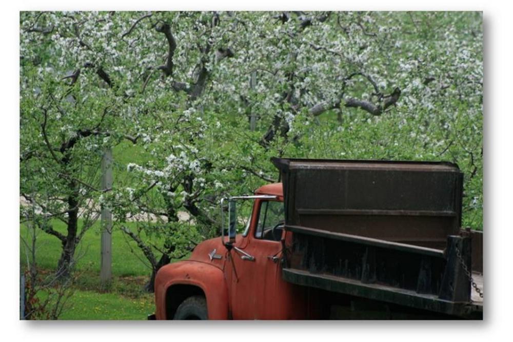 Hafs_Road_Orchard.jpg