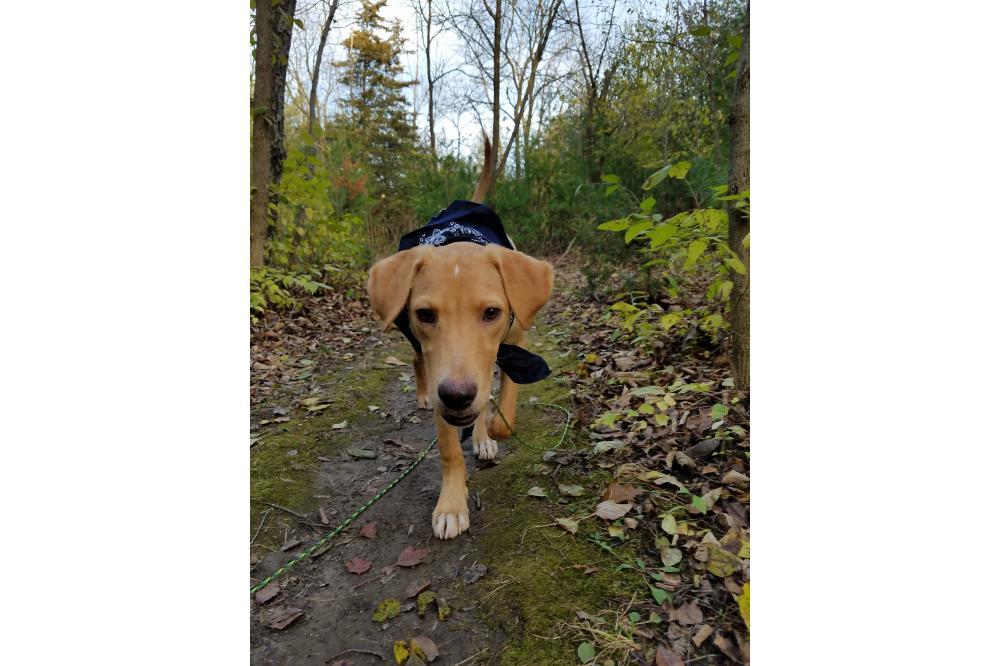 Trails_Pupper