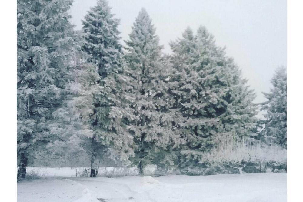 Bromley Winter