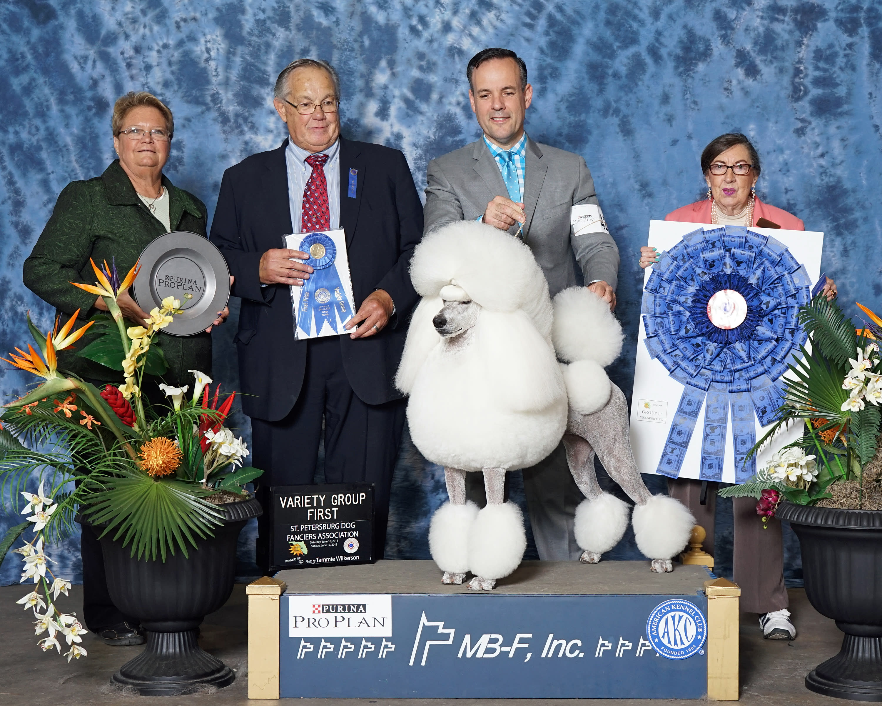 AKC ALL BREED DOG SHOW