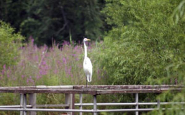 Whitney Pond Park