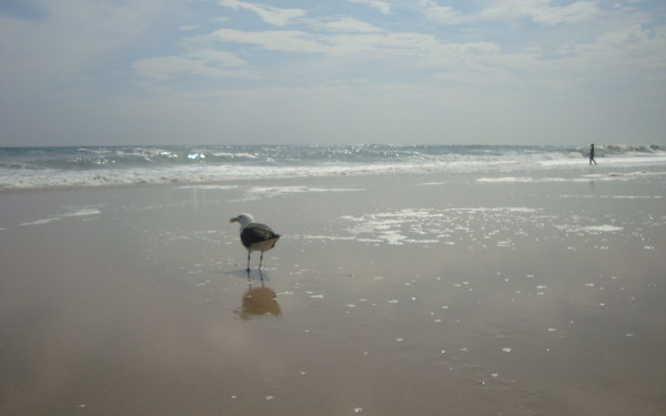 Tiana Beach