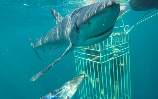 Sea Turtle Dive Charters llc – Shark Dive Montauk