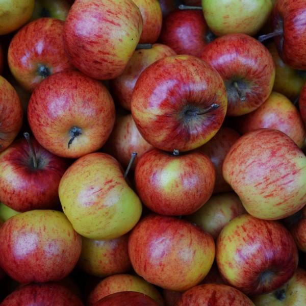 apples0-136219285056a36_13621a1e-5056-a36a-07d94314436aafc0.jpg