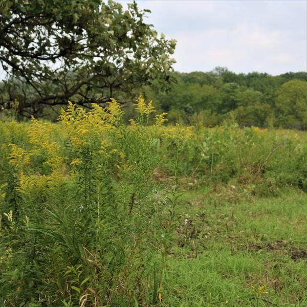 spring-creek-reserve--0a706edd5056a36_0a70702a-5056-a36a-07bebd014224385c.jpg