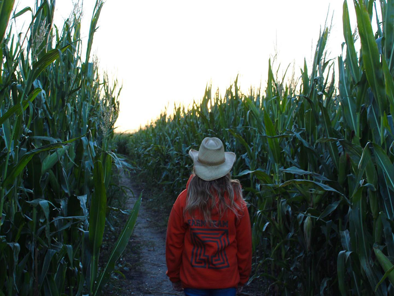 MB 150 corn maze takes you on an adventure at Deer Meadow Farms