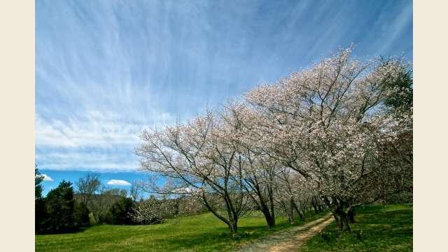 Springtime Countryside