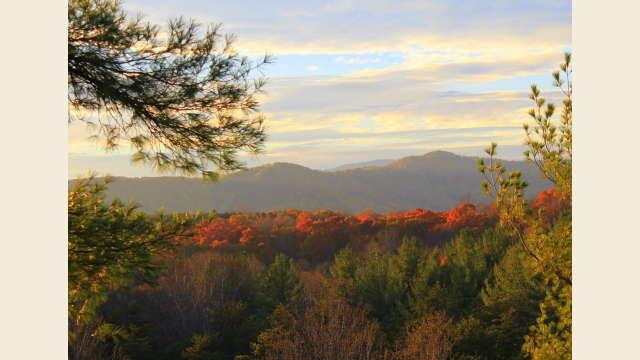 Fall in Albemarle County