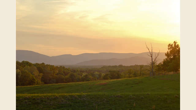 Albemarle County Golden