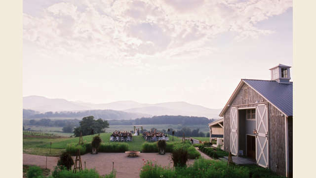 Pippin Hill Vineyard Wedding
