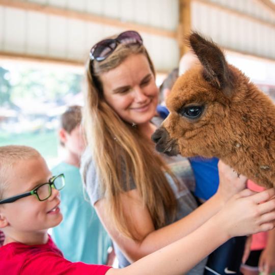 lazy-acre-alpacas-bloomfield-kids-petting