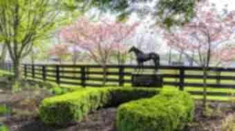 Horse Park is Open