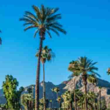 Palm Trees, blue skies, mountain ridge