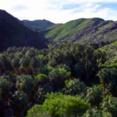 Palm Canyon, Mountains