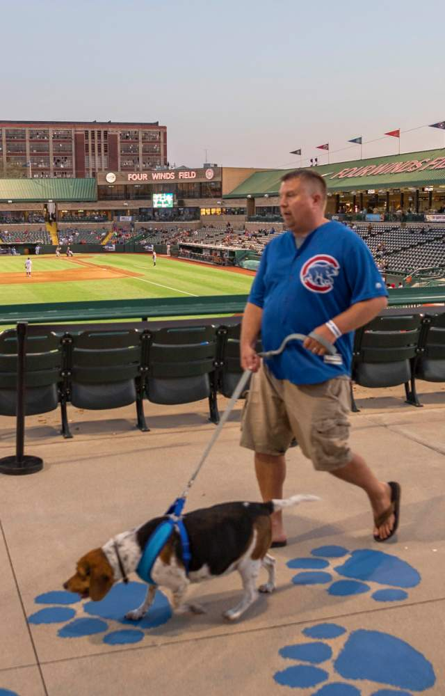 A South Bend Cubs fan and his dog walk along the concourse during a home game