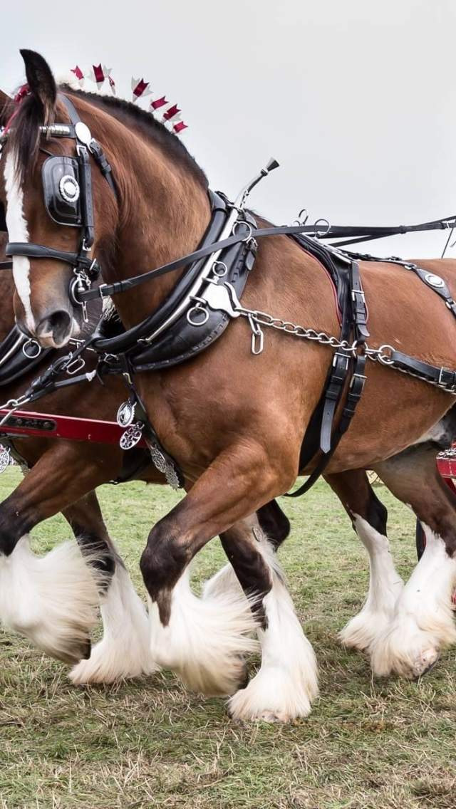 Horse and cart at the Dorset County Show
