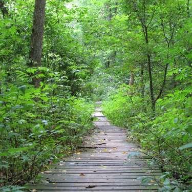 Boardwalk in John Bryan State Park