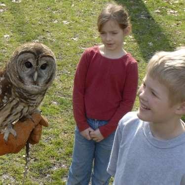 Barred Owl at the Glen Helen Raptor Center in Yellow Springs, Ohio